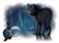 Detaily hry Prokletí vlkodlaků. Sběratelská edice